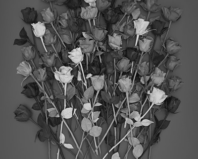 monochrome flowers colour grey