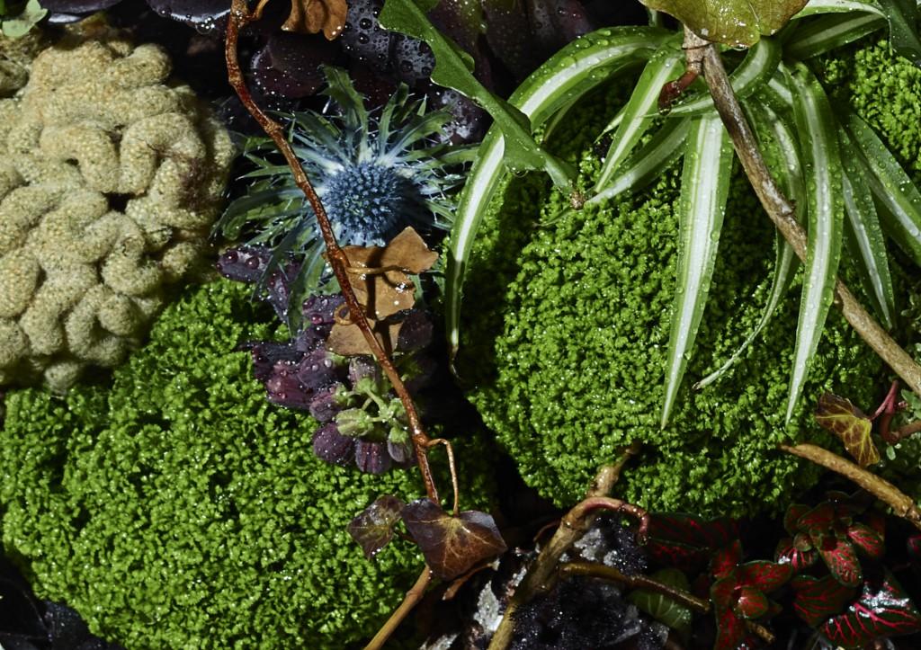 Planet Plant close up