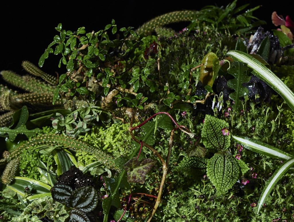 Planet Plant close up2