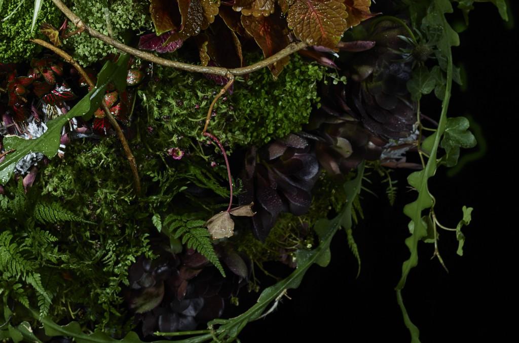 Planet Plant close up3