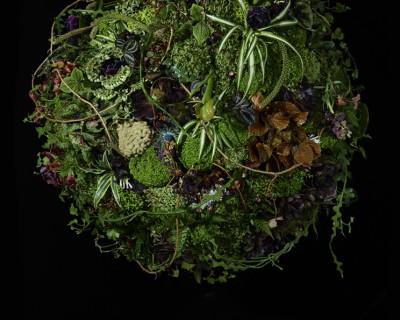 Planet Plant