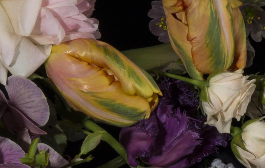 organic close up4